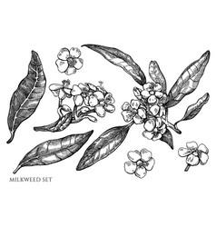 set hand drawn black and white milkweed vector image