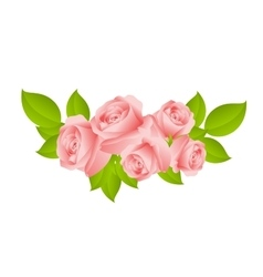sweet pink roses vector image