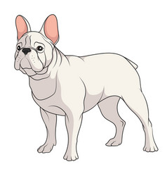 color a french bulldog vector image
