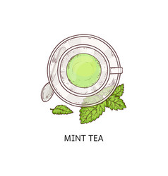 cup herbal mint flavor tea with leaves icon vector image