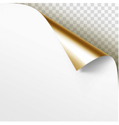curled golden corner white paper vector image
