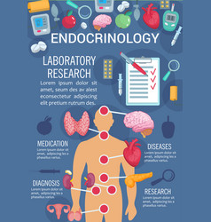 Endocrinology poster with human endocrine system vector