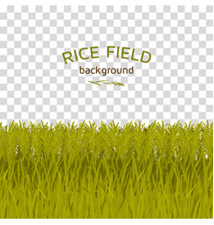 green rice field on checkered background vector image