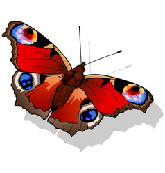 Peacock butterfly vector