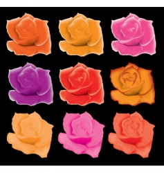 set of colorful roses vector image