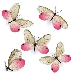 Set pink realistic butterflies cithaerias vector