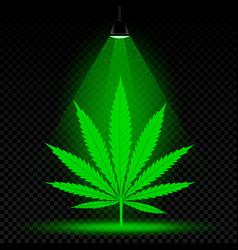 hemp leaf lamp light vector image