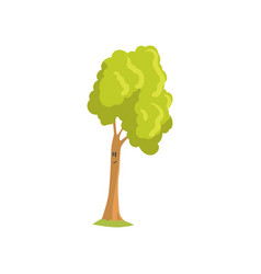 tall tree with smiling face expression humanized vector image
