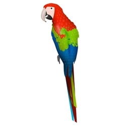 parrot bird detalised on white background in vector image