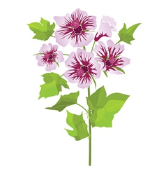 Pink flowers mallow with green leaves vector image