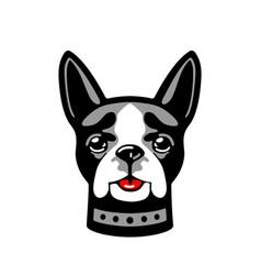 dog isolated on white background white vector image