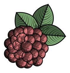 isolated vintage raspberry vector image