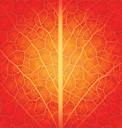 Red leaf vector