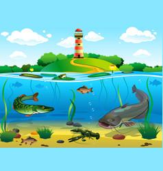 River underwater world river catfish pike crucian vector