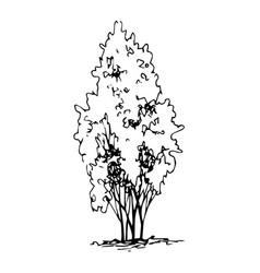 Shrub hand drawn sketch freehand drawing vector