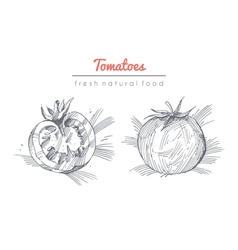 Tomatoes set vector image