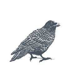 Black Raven Engraving vector image