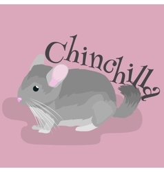 Pets Gray chinchilla domestic animals vector image