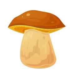Boletus edible mushroom vector