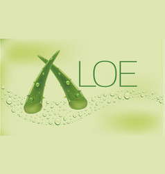 concept of aloe vera background with many drops vector image