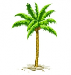 palm tree with coconut fruits vector image