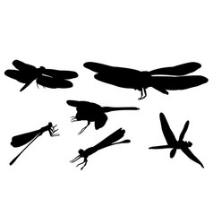 Set of different dragonflies vector