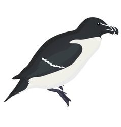 razorbill bird detalised on white background in vector image