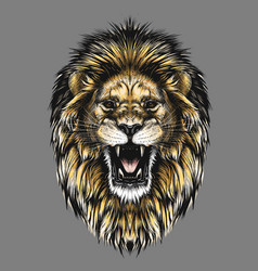 Hand drawn sketch of lion head in color isolated vector