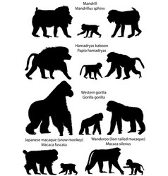 Silhouettes of monkeys vector
