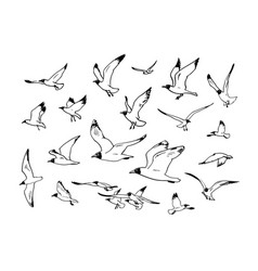 Sketch of flying seagulls hand drawn vector