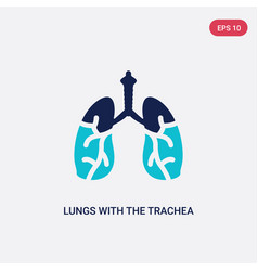 Two color lungs with trachea icon from human vector