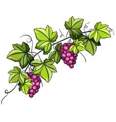 A grapevine vector