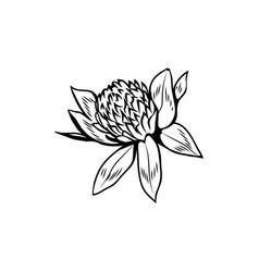 Clover in blossom black ink sketch vector