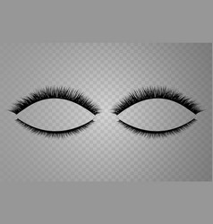 Realistic collection of false lashes vector