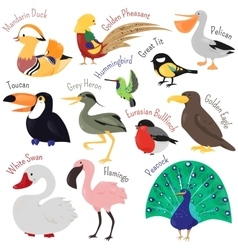 set cute cartoon birds isolated on white vector image