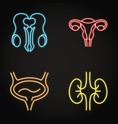 Urogenital system neon icon set in line style vector