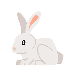 home animal pet - rabbit vector image