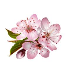 Spring pink sakura blossoms vector