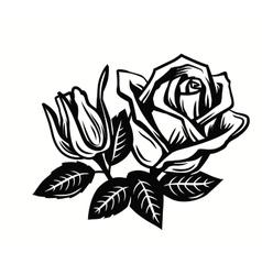 beautiful roses flower vector image
