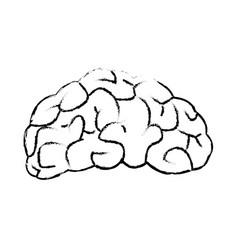 drawing brain human organ part anatomy vector image