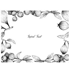 Hand drawn frame of humbug pears and guabiju fruit vector
