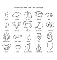 Human organ line icons vector