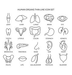 Human organ line icons vector image