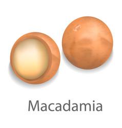 macadamia mockup realistic style vector image