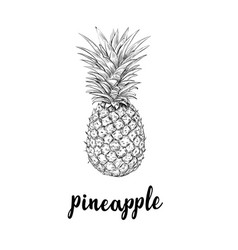Pineapple sketch is a vintage drawing vector