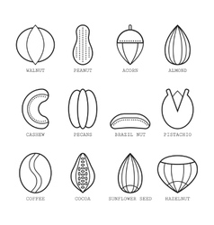 Set of flat linear icons with different nuts vector image
