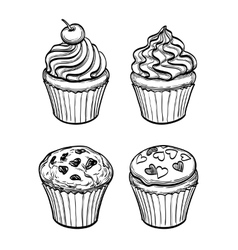 muffins and cupcakes vector image vector image