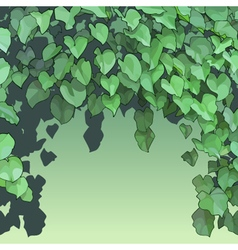 Background of dense green foliage vector
