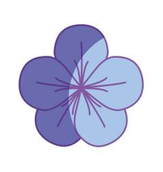 beautiful petals flower herbal botany vector image
