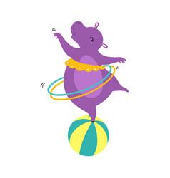 Circus hippo animal balancing in ball with hula vector